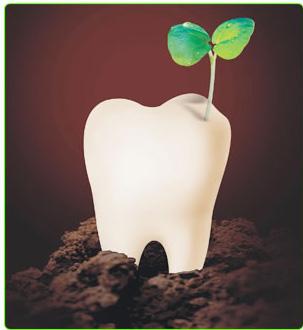 牙齿全部掉完了需要做多少颗种植牙?